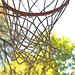 Hoop Dreams Among the Trees