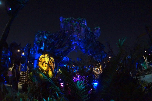 Animal Kingdom: Pandora at night