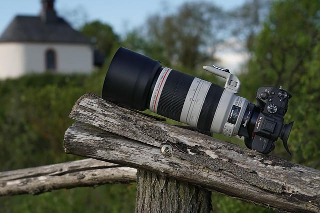 SONY ⍺7III & Canon EF100~400/4.5~5.6L IS II on Metabones T IV seen by SONY ⍺6500 & Sigma 50mm ƒf/1.4 DG HSM | Art on Sigma MC-11