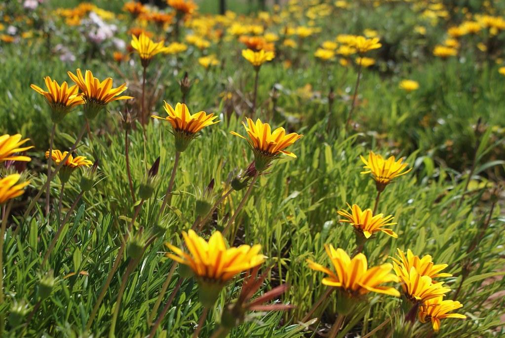 Fleurs du JardinJnan Sbilde Fès.