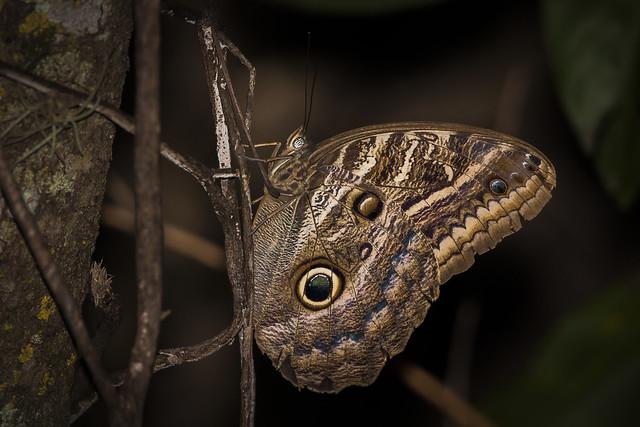 borboleta - butterfly, Canon EOS 5D MARK II, Sigma 150-600mm f/5-6.3 DG OS HSM | C