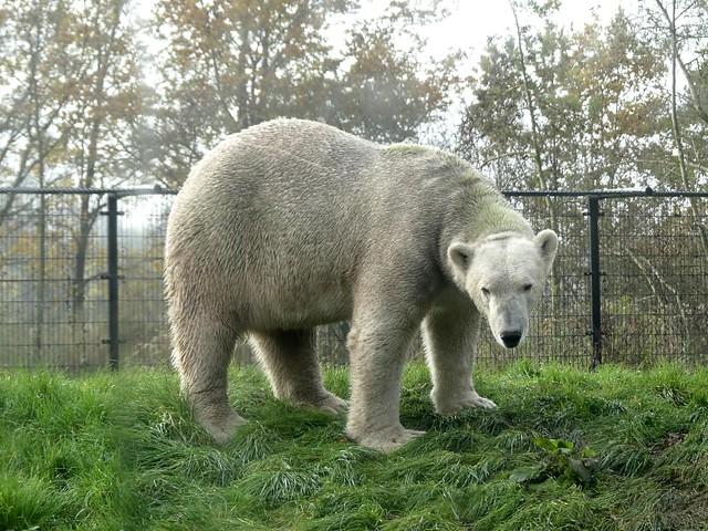 Eisbär Felix, AquaZoo Friesland