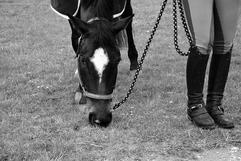 Horses 30.03 (3)