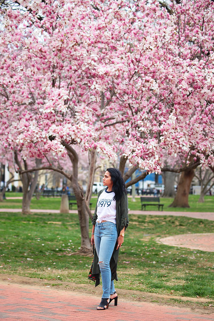 Cherry Blossom Season Tanvii.com