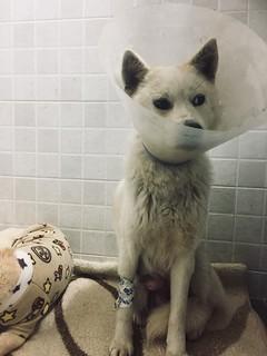Busan KAPCA Yangsan Dog Farm Rescue Update