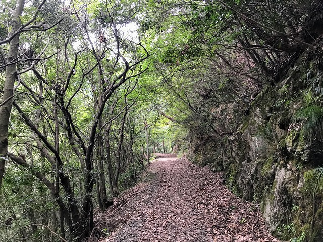 仙ヶ岳 林道 緑のトンネル