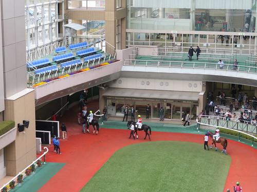 福島競馬場のパドック周回が終了して本馬場入場へ向かう馬