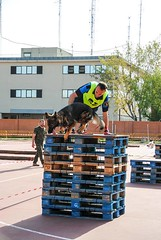 XV Carrera Guías Caninos. Centro Militar de la Defensa (20/4/2018)