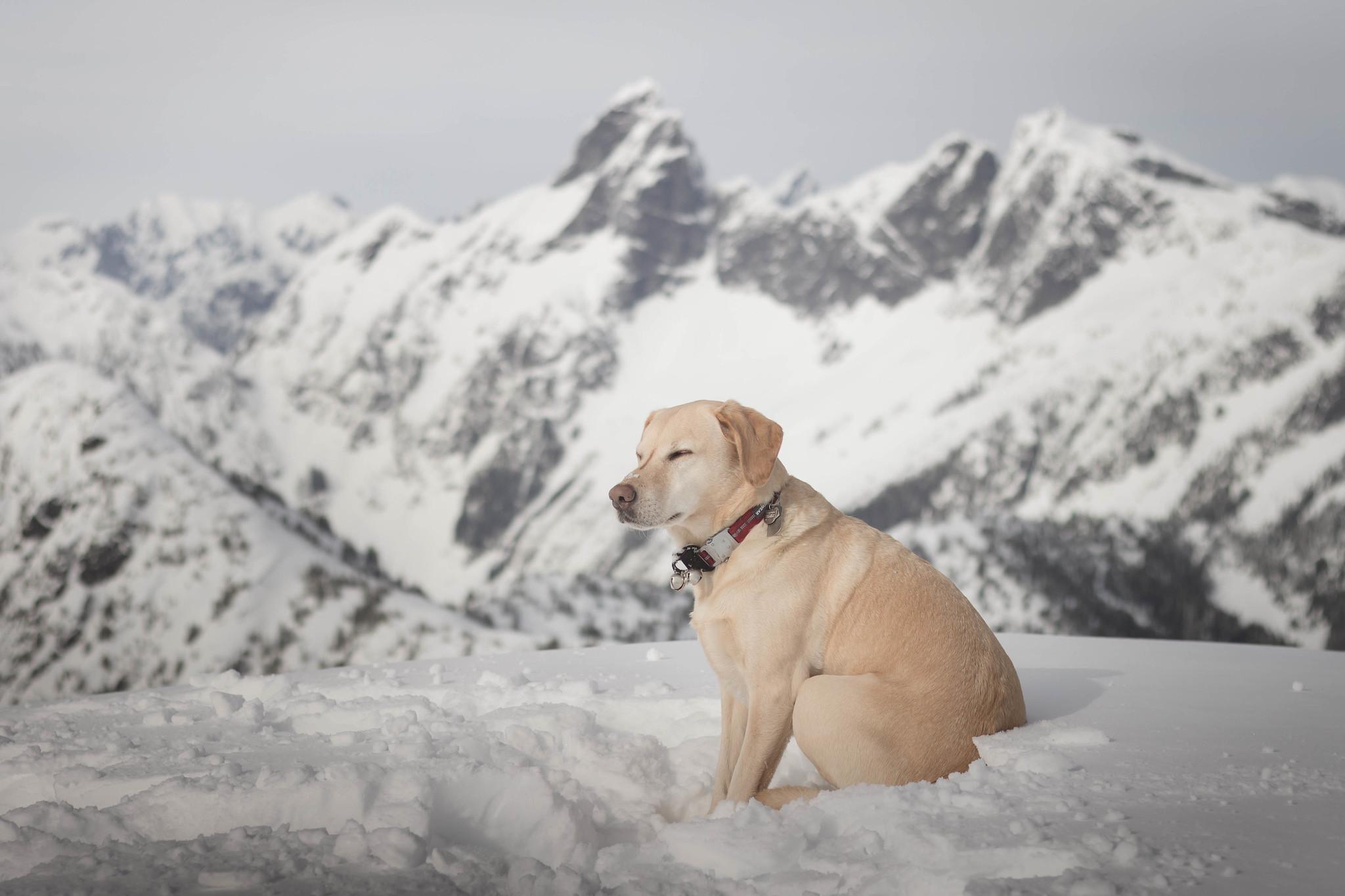 Summit dogs on Oakes Peak