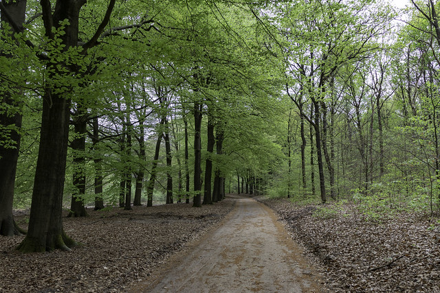 leeg wandelpad kaapse bossen Doorn