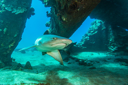 shark2Mar27-18