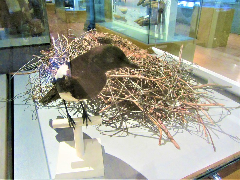 glasgow-ecosse-hunterian-museum-and-art-gallery-magpie-and-nest-thecityandbeauty.wordpress.com-blog-voyage-IMG_0012 (3)