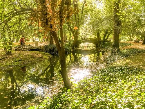 Reflejos Del Parque