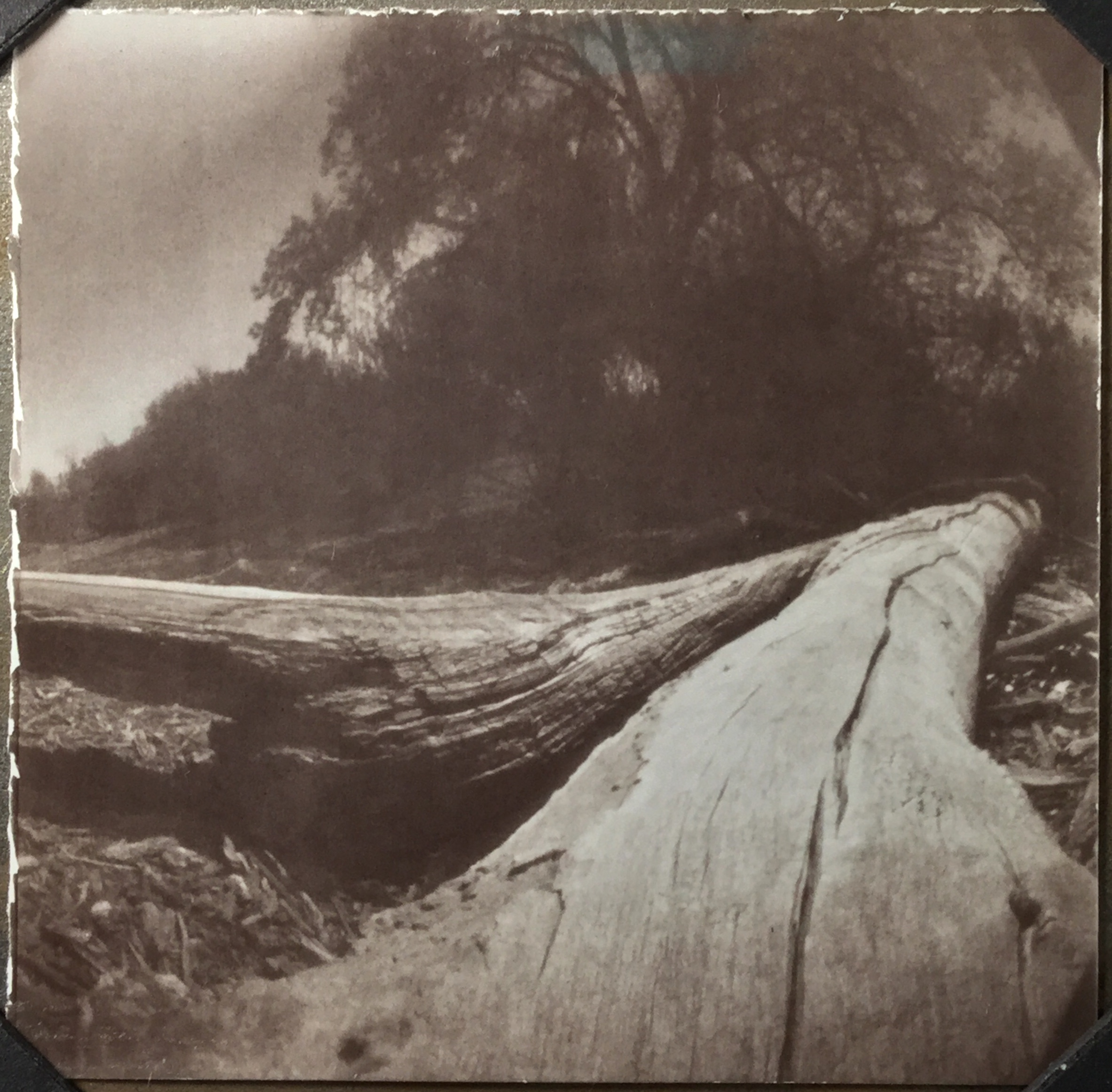 Rio Grande Bosque, Pinhole Camera, Harman Direct Positive Paper