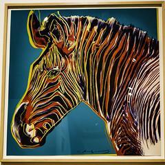 Warhol's Grevy's Zebra