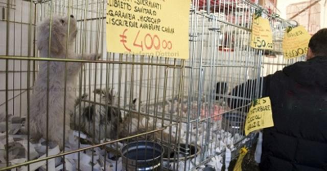 Noicattaro. divieto animali intero