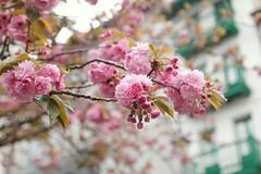 Bonjour, printemps