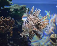 Wonders of Wildlfie National Museum and Aquarium