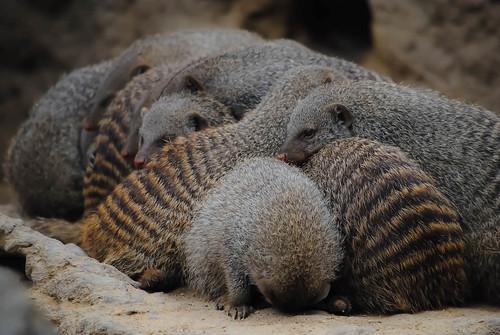 Sleeping in Groups