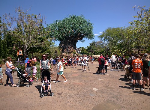 Disney's Animal Kingdom #throughglass