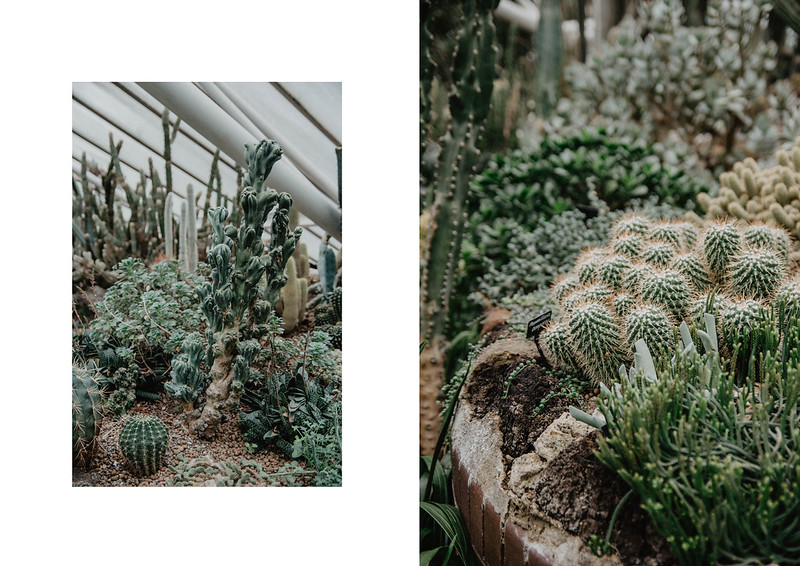the barbican conservatory 8