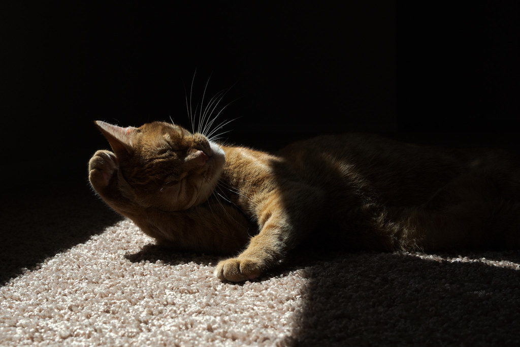 Our cat Sam cradles his head in his upraised arms as he bathes in a sunbeam