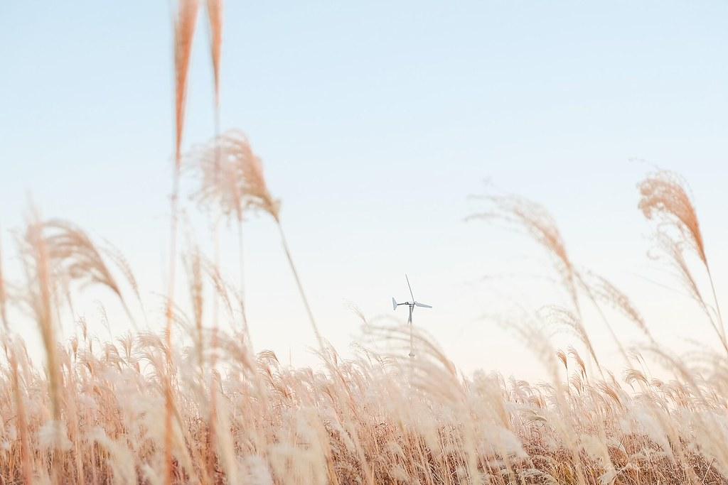 silver_grass_haneul_park_seoul