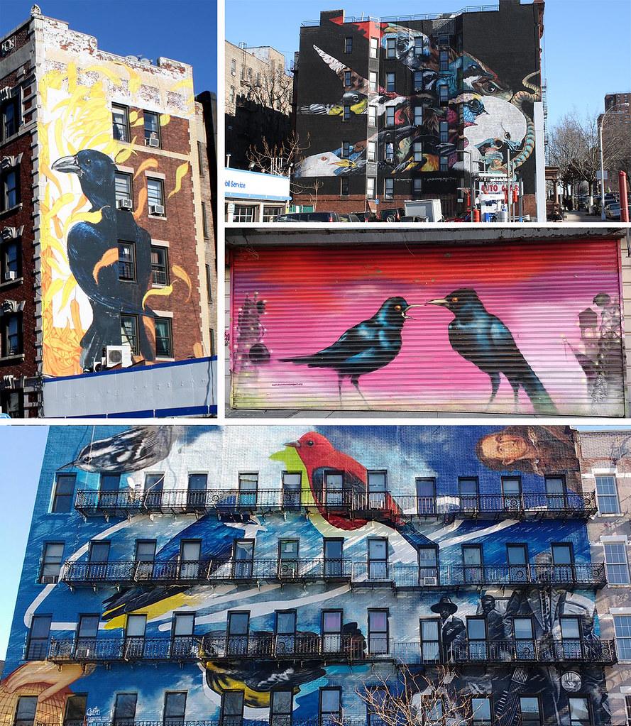 Harlem-birds