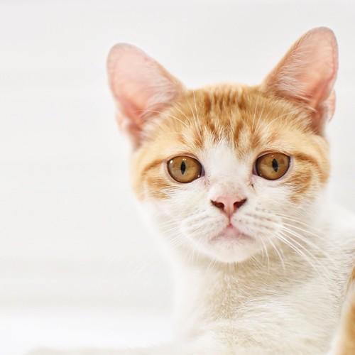 #cat #35mm1.8