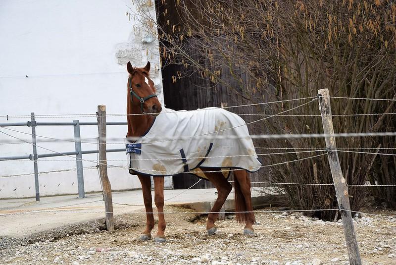 Horses 30.03 (1)