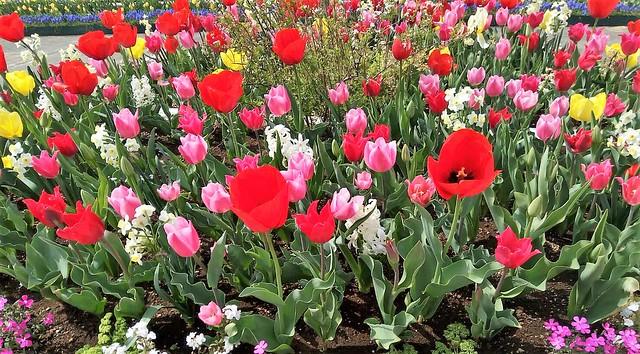 濱松花卉主題公園 (18)