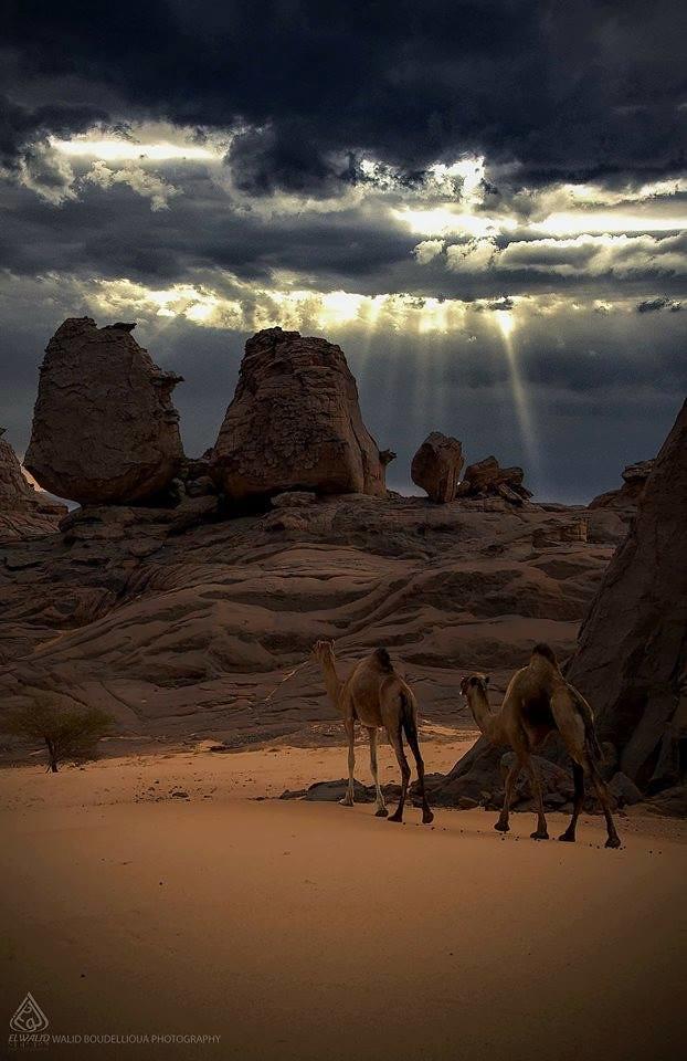 صور نادرة للطبيعة الجزائرية - صفحة 19 41262313951_0909ac29df_b