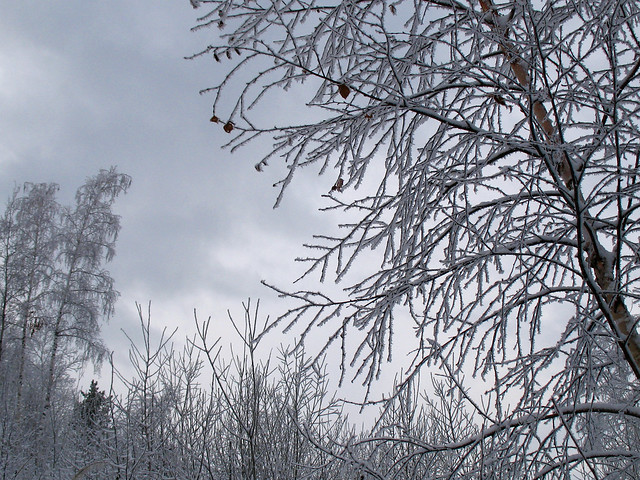 Берёза зимний покой стережёт, Canon POWERSHOT A640