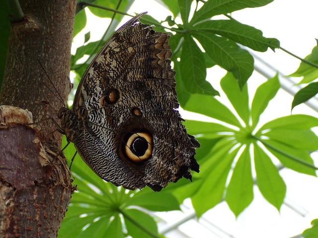HortusButterflies6