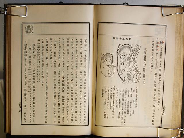 今田束『實用解剖學』卷二 明治33年十一版(後半)