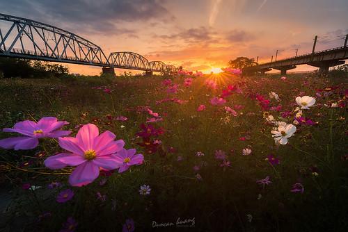 下淡水溪鐵橋夕陽