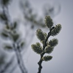 20180415-184926 - Spring Nature Bokeh