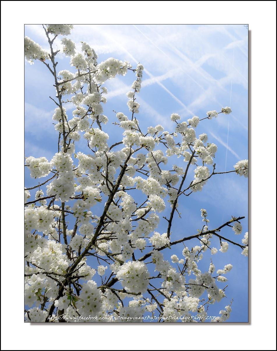 J'suis content C'est l'printemps 26653377787_8c65bba931_o