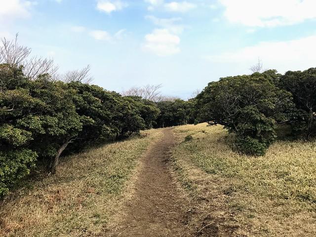 入道ヶ岳 北尾根 アセビの園