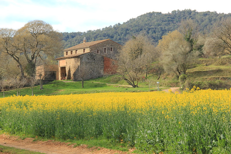 Fields of gold, Besalú to Esponella