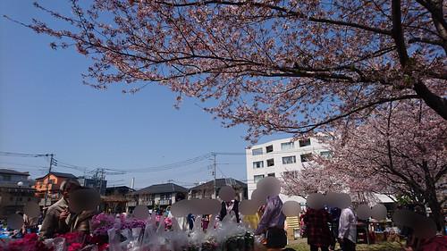 20180402_郷町会桜祭り