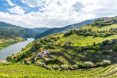 Not just any port Douro Valley