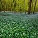 Garlic galore by snowyturner