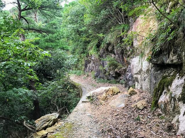 仙ヶ岳 林道 落石