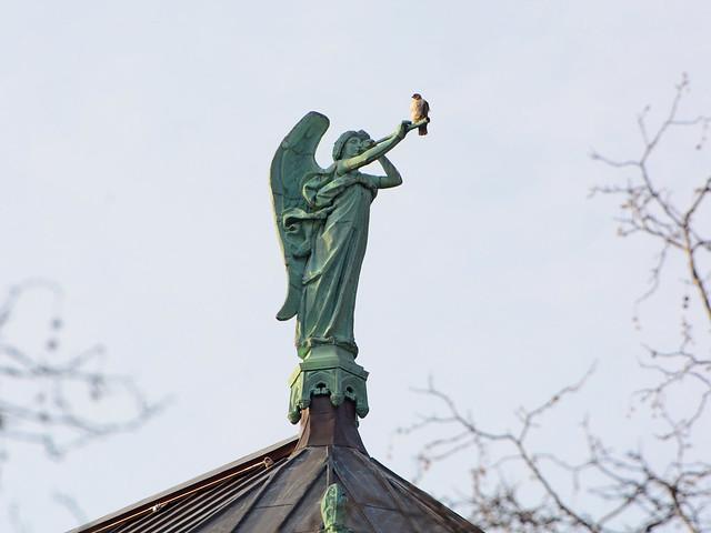 Cathedral Hawk - 8733