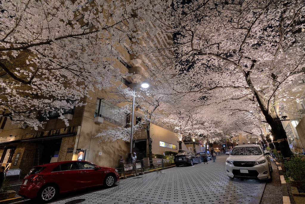 Cherry blossom at Roppongi