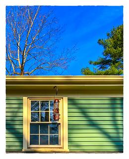 Birdwatching Window