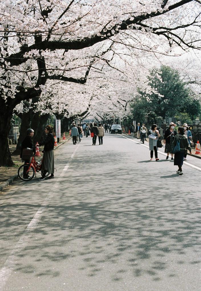 2018-03-30 谷中の桜 002