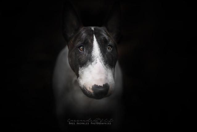 Âmes Animales Photographies - Page 2 41546997565_2cc582ea01_z