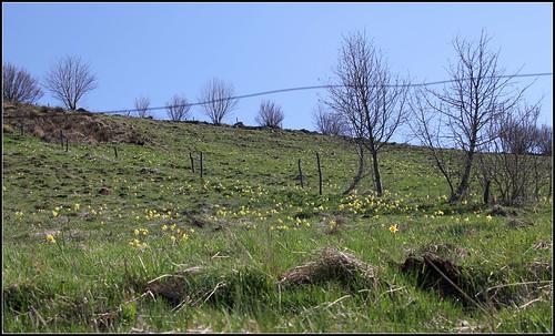Autour du Mézenc en avril-mai - Page 2 41623873361_8e104c720c